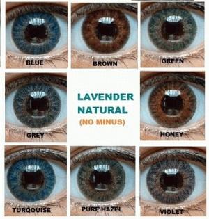 Softlens Lavender Natural